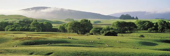 farmland-southland-new-zealand