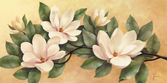fasani-magnolia