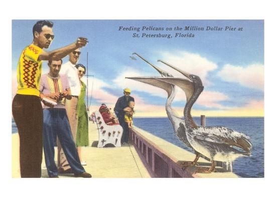 feeding-pelicans-st-petersburg-florida