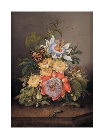 ferdinand-bauer-passionflowers-1812
