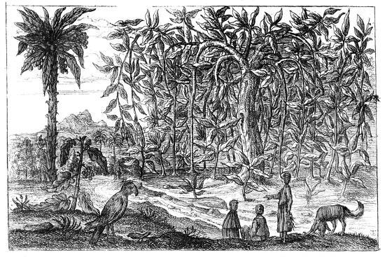 fig-trees-19th-century