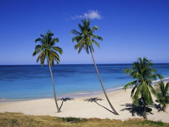 firecrest-pictures-palm-trees-on-beach-antigua-caribbean-west-indies-central-america