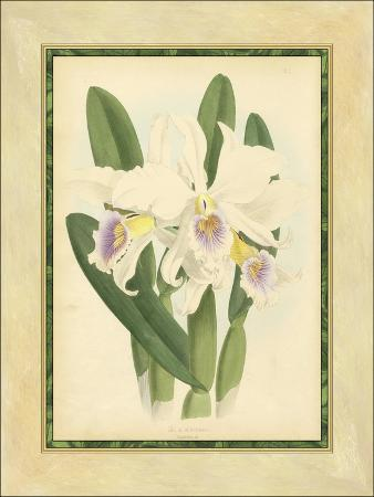 fitch-fitch-orchid-ii