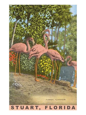 flamingos-stuart-florida