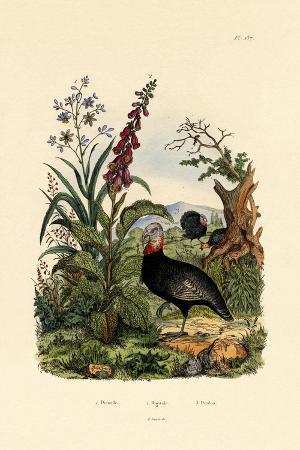 flaxlily-1833-39