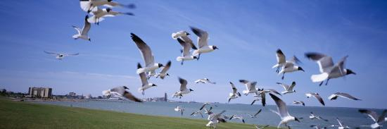 flock-of-seagulls-flying-on-the-beach-new-york-usa