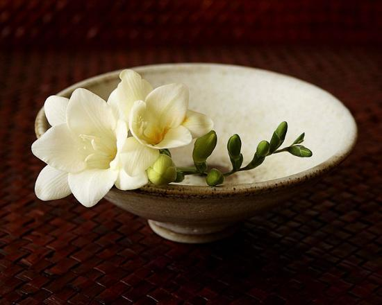florence-rouquette-freesia-and-bowl
