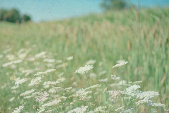 flower-field-landscape