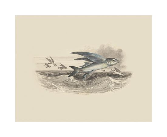 flying-fish-i