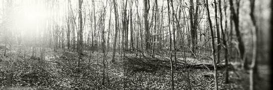 forest-pocono-mountains-pennsylvania-usa