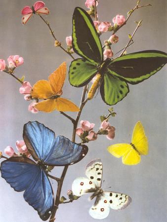 found-image-press-butterflies-on-a-branch