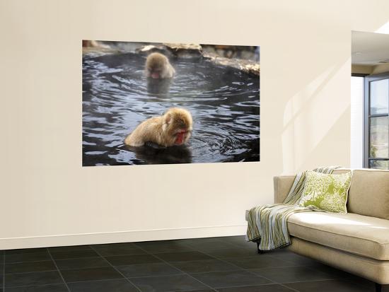 frank-carter-snow-monkeys-japanese-macaque-in-jigokudani-yaen-koen-hot-spring