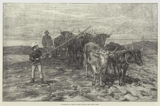 frank-dadd-ploughing-on-the-sussex-downs