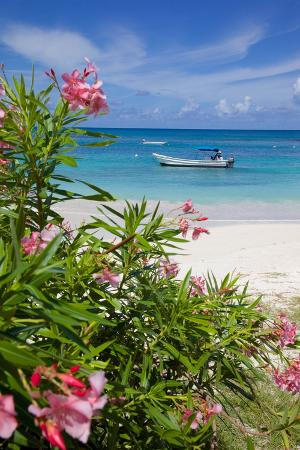 frank-fell-long-bay-and-beach-antigua-leeward-islands-west-indies-caribbean-central-america