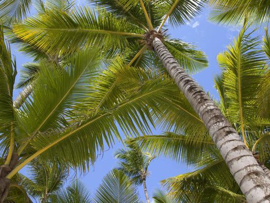 frank-fell-palm-trees-punta-cana-dominican-republic-west-indies-caribbean-central-america