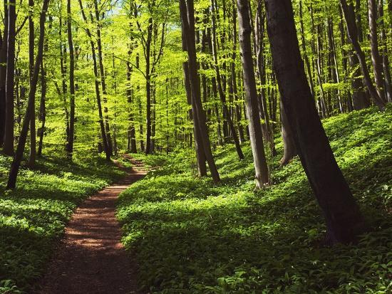 frank-krahmer-path-in-beech-forest