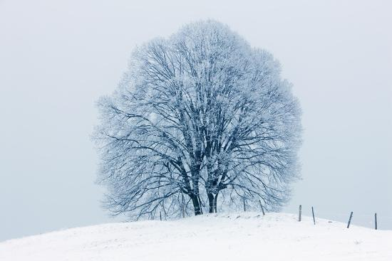 frank-krahmer-winter-landscape-with-snow-covered-lime-tree