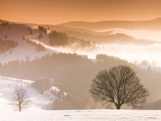 frank-lukasseck-beech-trees-in-snow-covered-landscape