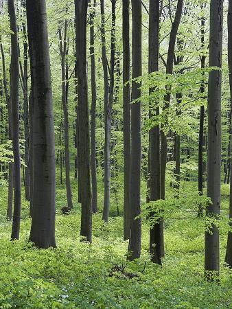frank-lukasseck-trees-in-forest
