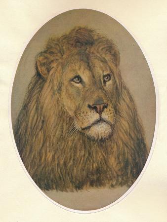 frank-paton-lions-head-c1896