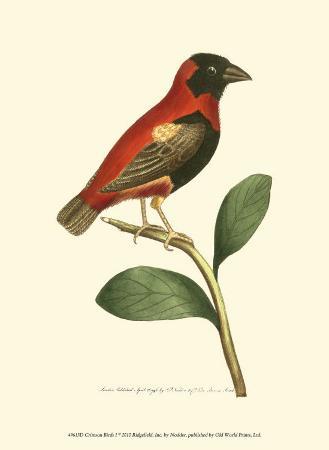 frederick-p-nodder-crimson-birds-i
