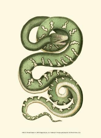 frederick-p-nodder-vibrant-snake-i