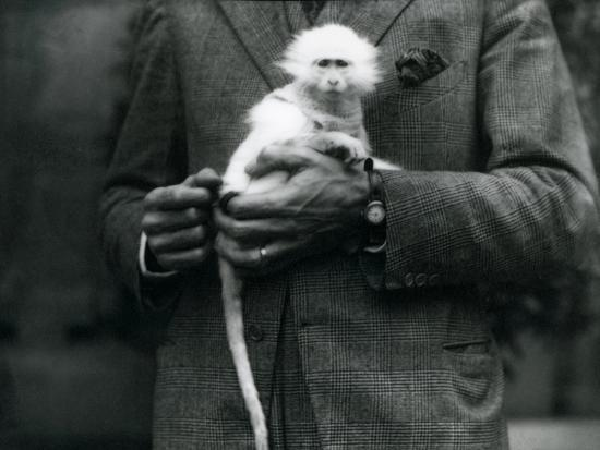 frederick-william-bond-an-albino-old-world-monkey-genus-ceropithecus-being-held-at-london-zoo-july-1922