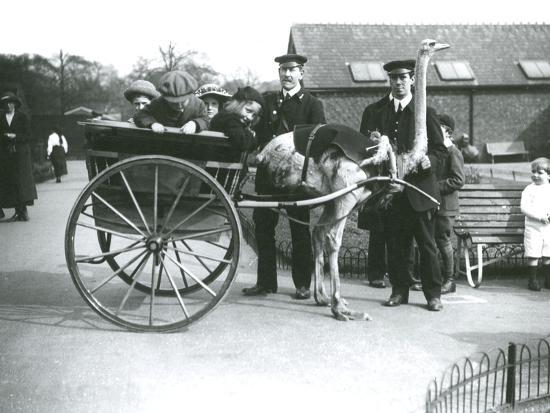 frederick-william-bond-an-ostrich-cart-ride-with-children-and-keepers-george-blore-and-william-dexter-at-london-zoo