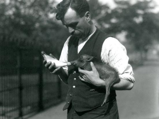 frederick-william-bond-keeper-harry-warwick-bottle-feeds-a-baby-warthog-at-london-zoo-in-august-1922