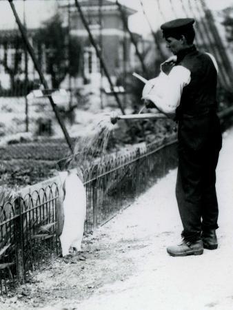frederick-william-bond-king-penguin