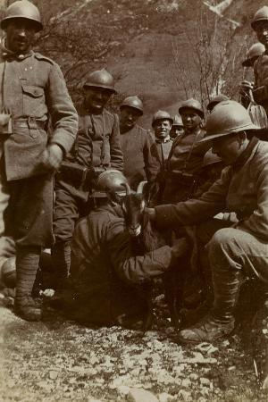 free-state-of-verhovac-july-1916-italian-soldiers-with-goat-in-the-field-fous-rio-in-val-d-aupa