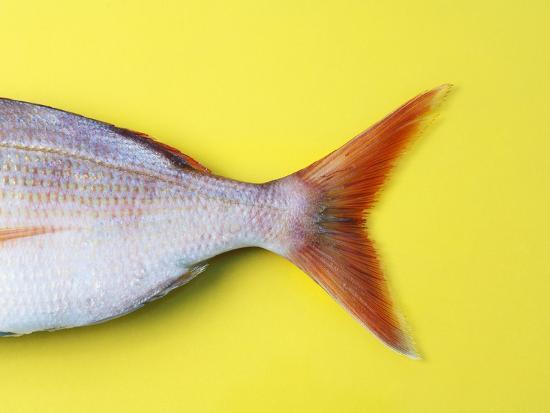 fridhelm-volk-tail-fin-of-a-common-pandora