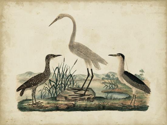 friedrich-strack-great-white-heron-and-night-heron