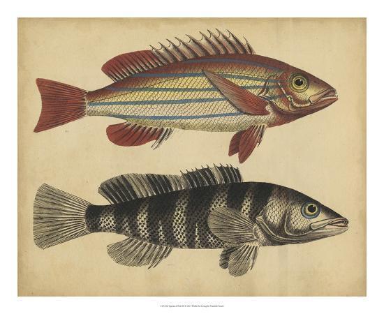 friedrich-strack-species-of-fish-iii