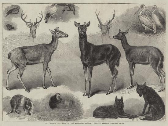 friedrich-wilhelm-keyl-new-animals-and-birds-in-the-zoological-society-s-gardens-regent-s-park