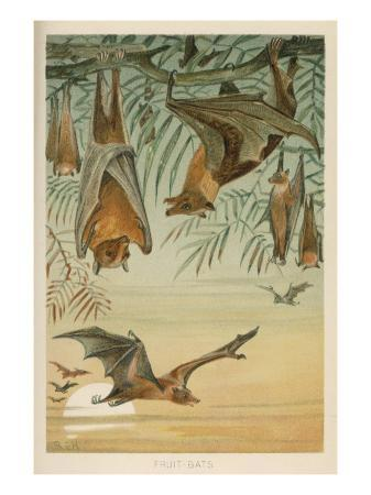 fruit-bats-hanging-in-trees-and-flying-during-a-full-moon