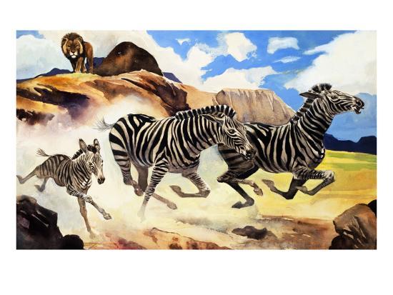 g-w-backhouse-lion-hunting-zebras