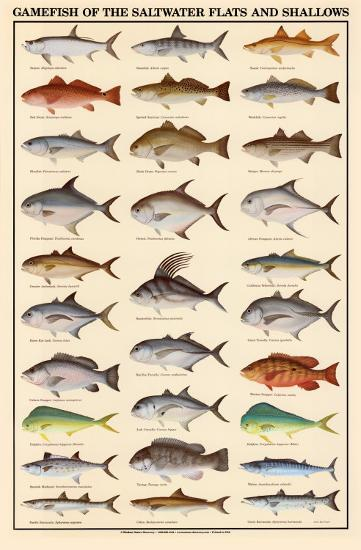 Game fish of the saltwater flats and shallows art print at for Saltwater fishing apps