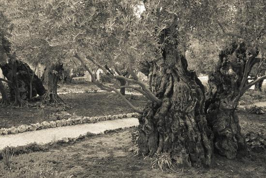 garden-of-gethsemane-mount-of-olives-jerusalem-israel