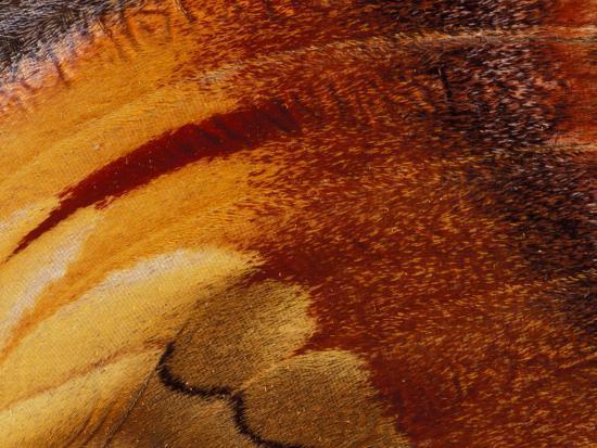 gavriel-jecan-butterfly-wing-detail