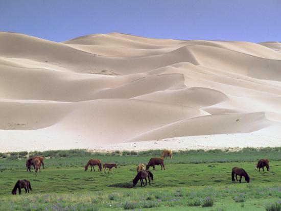 gavriel-jecan-wild-horses-gobi-desert-mongolia