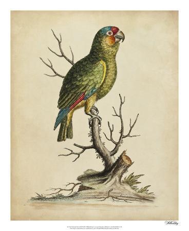 george-edwards-edwards-parrots-iii