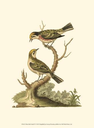 george-edwards-petite-bird-study-iv