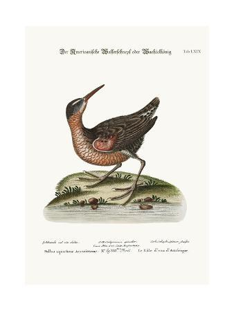 george-edwards-the-american-water-rail-1749-73