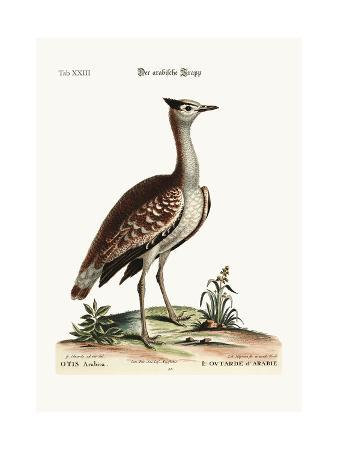 george-edwards-the-arabian-bustard-1749-73