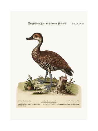 george-edwards-the-black-billed-whistling-duck-1749-73