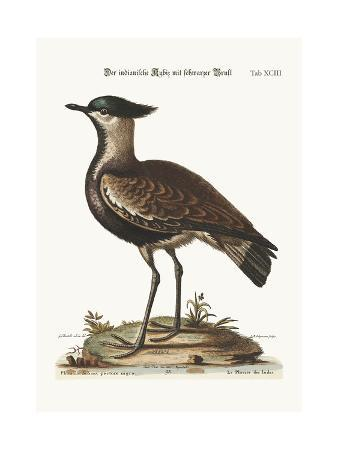 george-edwards-the-black-breasted-indian-plover-1749-73