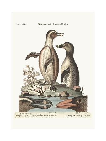 george-edwards-the-black-footed-penguins-1749-73