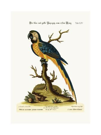 george-edwards-the-blue-and-yellow-maccaw-1749-73
