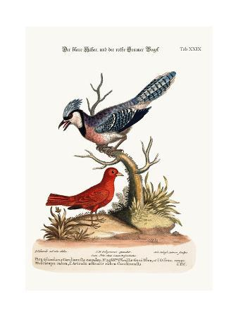 george-edwards-the-blue-jay-and-the-summer-red-bird-1749-73